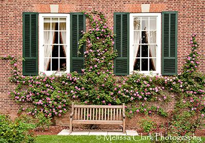 British Embassy Garden, Climbing Rose, Garden Bench