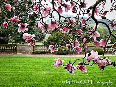 Filoli Center garden
