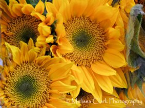 Sunflowers at the grocery store
