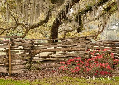 Magnolia Plantation Gardens, Charleston, live oaks