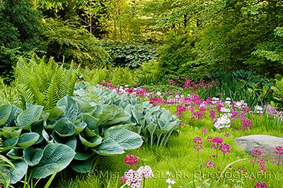 Chanticleer Garden, primulas, hostas