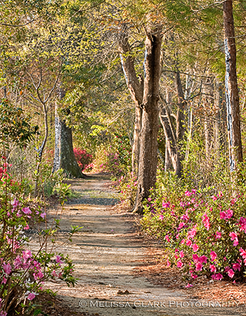 Cypress Gardens, azaleas, nature trail