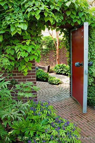 Lathyrus vernis, Garden Conservancy, Mountsier garden