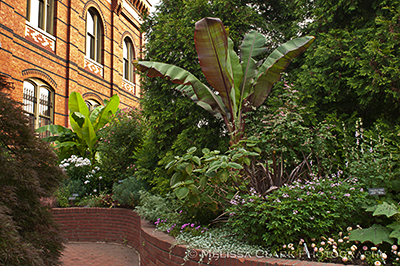 Mary Livingston Ripley Garden, Smithsonian Gardens