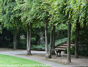Dumbarton Oaks, Ellipse, Carpinus caroliniana