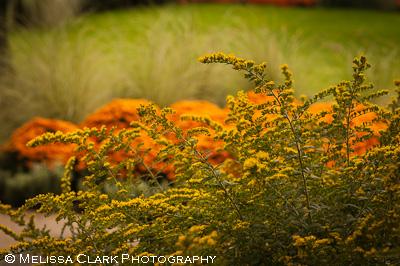Longwood Gardens, Conservatories