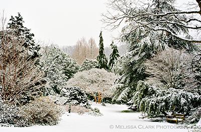 National Arboretum, Gotelli Collection