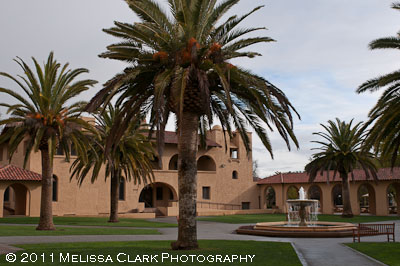 Stanford University, palm trees, Old Union Complex