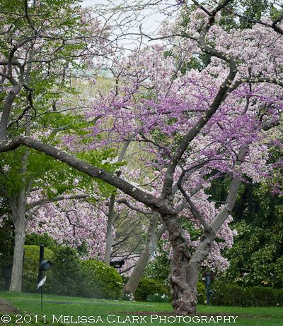 White House Gardens