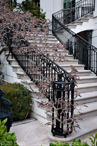 White House Gardens, wisteria