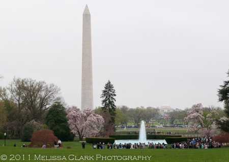 White House Gardens, White House grounds
