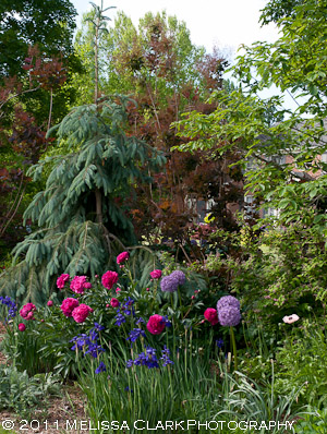 Peonies, alliums, siberian iris, deer-resistant plants