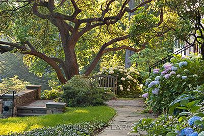 garden bench, Malus floribunda