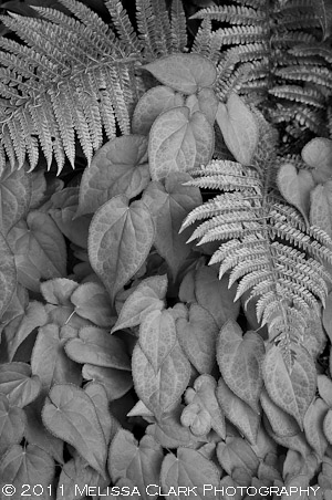 black and white garden images
