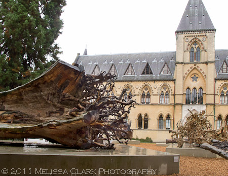 Ghost Forest installation, tree roots, Wawa tree, Oxford Museum of Natural History