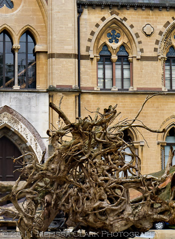 Ghost Forest, Oxford Museum of Natural History