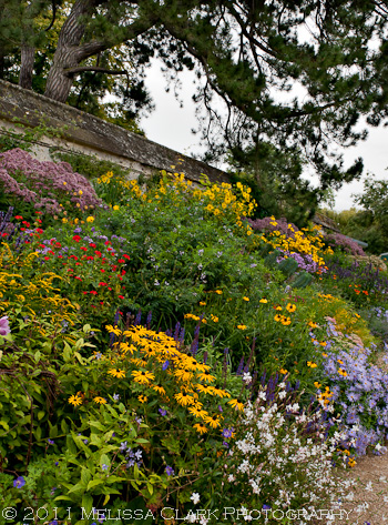 Oxford Botanic Garden, Autumn Border, Sandra Pope, Nori Pope