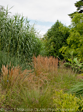 Oxford Botanic Garden, ornamental grasses