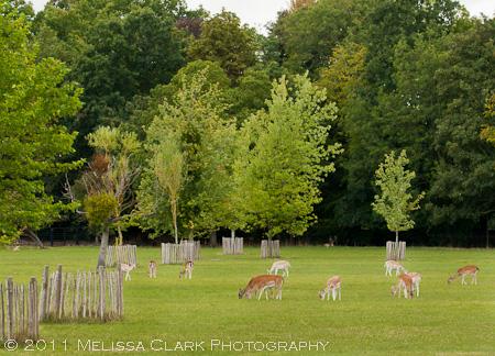 Deer Grove, Deer Park, Magdalen College, Oxford England