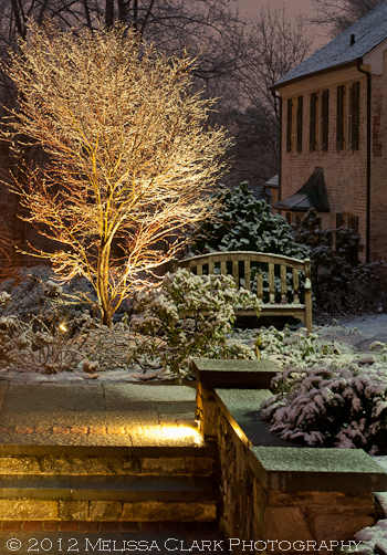 Garden lighting, Acer palmatum 'Glowing Embers,' garden design, winter gardens