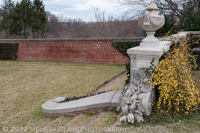 Dumbarton Oaks, winter jasmine, Jasminum nudiflorum