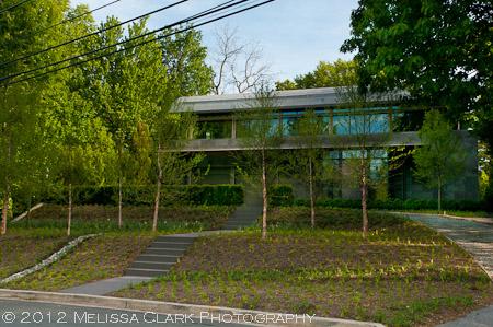 modern architecture, modern gardens, Betula nigra, river birches