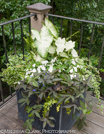 shade containers, shade plant combinations, Landscape Projects