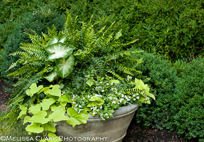 shade planter, shade planting combinations, white gardens, Landscape Projects Inc.