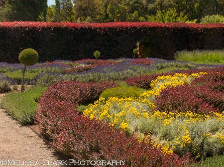 Filoli, knot garden