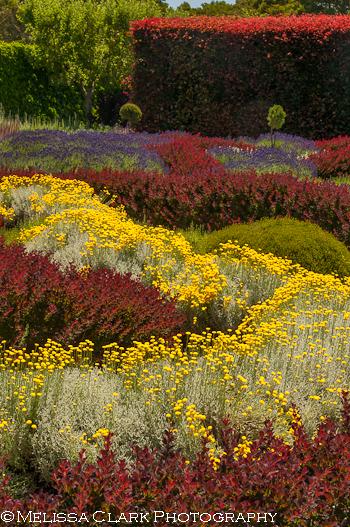 Filoli, knot garden, circular polarizer