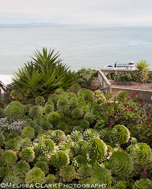 Garden Conservancy, Gardens of Alcatraz, Golden Gate National Parks Conservancy