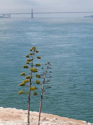 Garden Conservancy, Alcatraz Gardens
