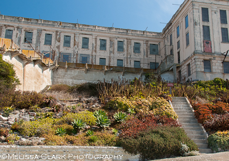 Alcatraz Gardens, The Garden Conservancy, Golden Gate National Parks Conservancy