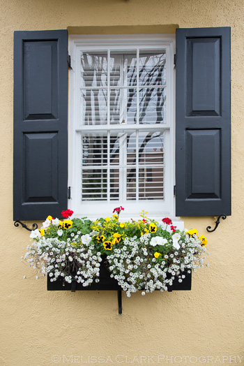 Another window box, immaculately kept.