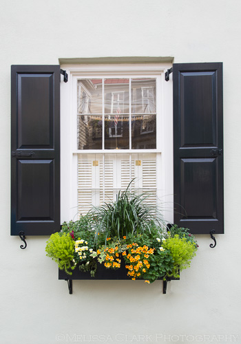 Charleston gardens, window boxes