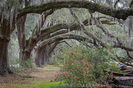 Charleston, Magnolia Plantation
