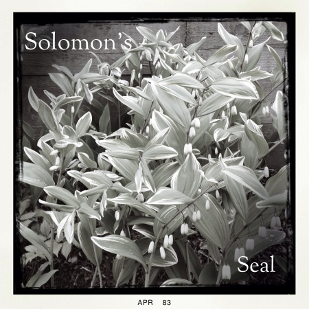 iPhone 5 photos, Hipstamtatic app, black and white garden photos