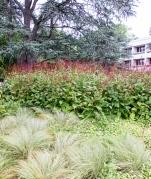 American University arboretum, summer