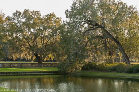 Live oaks leaning over a pond at Middleton Plantation
