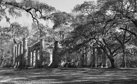 Live Oaks, Old Sheldon Church, Charleston SC