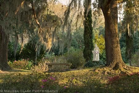 live oaks, Middleton Place