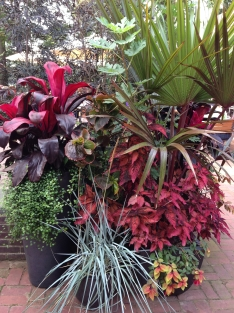 A lushly planted container near the cafe.