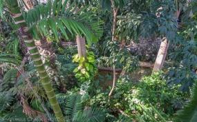 US Botanic Garden