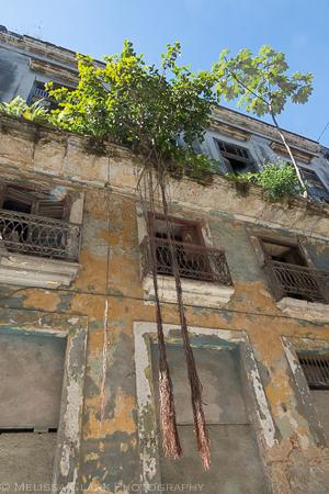 Garden Spots In Havana Garden Shoots