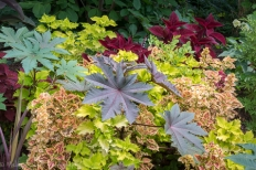 Castor bean plants make a bold statement among coleus and other annuals and perennials in the parking lot beds.