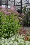 Green Springs Garden_20140714_0025
