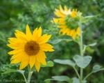 Green Springs Garden_20140714_0033