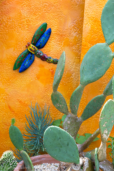 A brilliantly colored wall sets off cactus and other xeriscape plants.