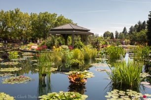 Another view of the Monet's Garden area.