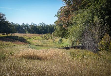 Longwood Meadow Garden